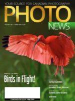 Magazine vol.29 no.1